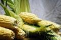 Summer corn Royalty Free Stock Photo