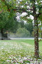 Summer: crab-apple tree after hailstorm Royalty Free Stock Photo