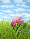 Summer cricket ball grass background an old on and sunny sky Stock Photography