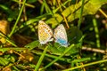 stock image of  Summer day, butterflies mating in the meadow