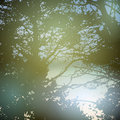 Summer Design, Forest, Nature ...
