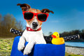 Summer dog on bike holiday a basket and his yellow sweet duck Royalty Free Stock Images