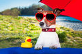 Summer dog under umbrella with yellow duck and on holidays Stock Photos