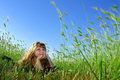 Summer dream in the grass Royalty Free Stock Photo