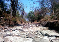 Summer dried river in tropical indian forest a the middle of of vindhya mountain range Stock Images