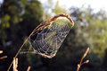 Summer end spider web in morning light Stock Photography