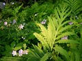 Summer: evening sunlit ferns and wildflowers Stock Images