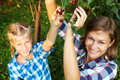 Summer family picking cherry from tree. Royalty Free Stock Photo