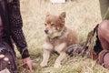Summer festival doggie Royalty Free Stock Photo