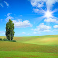 Summer field cultivated wavy fields an tree in the sun Royalty Free Stock Photos