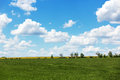 Summer field with cumulus clouds and blue sky Royalty Free Stock Images