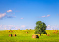 Summer field hay bales in a green with a lone tree Royalty Free Stock Photo