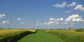 Summer field landscape with blue sky and clouds and green fields Royalty Free Stock Photography