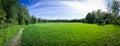 Summer Field Panorama Royalty Free Stock Image