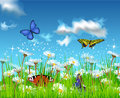 Summer field vector landscape of with butterflies flying among the flowers Stock Images