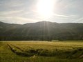Summer field a warm morning in june in the outback of austria s alps region sunrise nature Stock Image