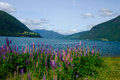 Summer in the fjords of norway sun blue sky sea and wildflowers Royalty Free Stock Photos
