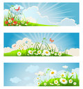 Summer floral banners with sky clouds chamomile and butterflies Royalty Free Stock Image