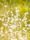 Summer floral grass Stock Image