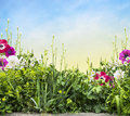 Summer flower bed with iris and anemones on sunny skay floral border gardening Stock Photo