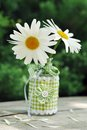 Summer flower daisy in vase on old wood in garden Stock Photography