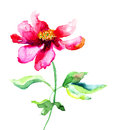 Summer flower red watercolor illustration Royalty Free Stock Images