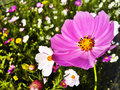 Summer flower spring nature series macro Royalty Free Stock Photos