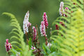 Summer flowers and ferns Royalty Free Stock Photo
