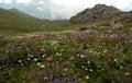 Summer flowers motley grass mountain meadow lush greenery pasture pastureland distance Stock Photo