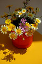 Summer flowers in red pot lovely tin containing like yellow and lavender daisies Stock Photography
