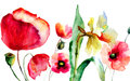 Summer flowers watercolor illustration of Stock Photo