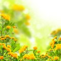 Summer flowers yellow on a floral background Royalty Free Stock Photo