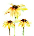 Summer flowers yellow watercolor illustration Royalty Free Stock Image