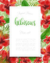 Summer flyer design with tropical plants and hibiscus flowers Royalty Free Stock Photo