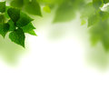 Summer foliage against white backgrounds Stock Photo