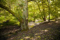 Summer forest idyllic and mystical landscape with beech and a stream Stock Photo