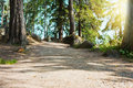Summer forest mountain path at sunset beautiful Royalty Free Stock Image