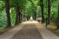 Summer forest road Royalty Free Stock Photo