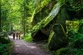 Summer forest Schwarzwald in Triberg, Germany