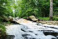 Summer forest stream Royalty Free Stock Photography