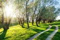 Summer forest with sun and ground road Royalty Free Stock Photo
