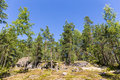Summer forest sunny landscape in with rocks and sky Royalty Free Stock Image
