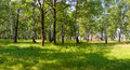 Summer forest on sunny morning Royalty Free Stock Image