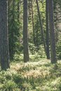 summer forest trees. nature green wood sunlight backgrounds - vi