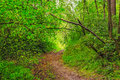 Summer forest winding path in the green Royalty Free Stock Photo