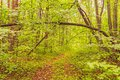 Summer forest winding path in the green Stock Images