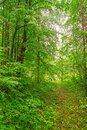 Summer forest winding path in the green Royalty Free Stock Image