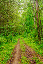 Summer forest winding path in the green Stock Image