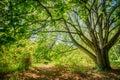 Summer Forest Woods, Lane, Pat...