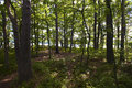 Summer forrest Royalty Free Stock Photos